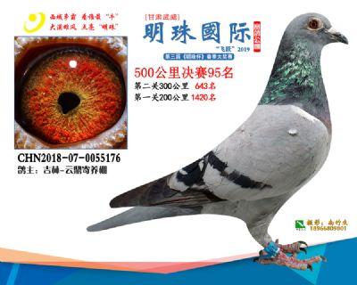 2019武威明珠95