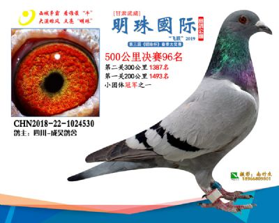 2019武威明珠96