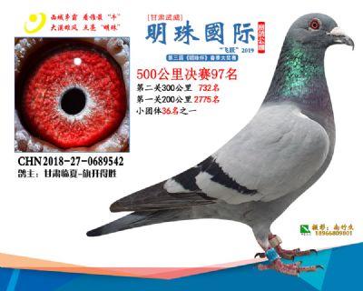 2019武威明珠97