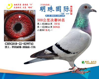 2019武威明珠98