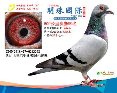 2019武威明珠99