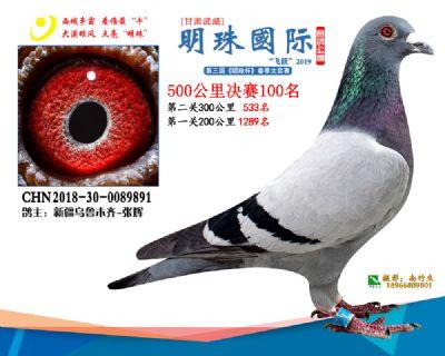 2019武威明珠100