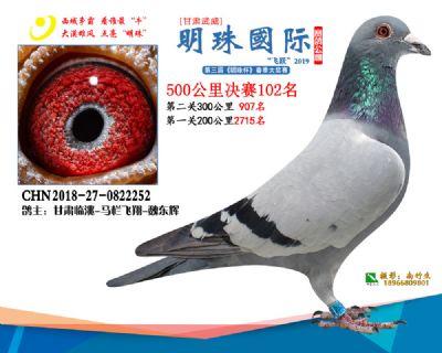 2019武威明珠102