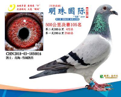 2019武威明珠105