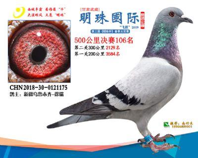 2019武威明珠106