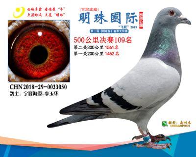 2019武威明珠109