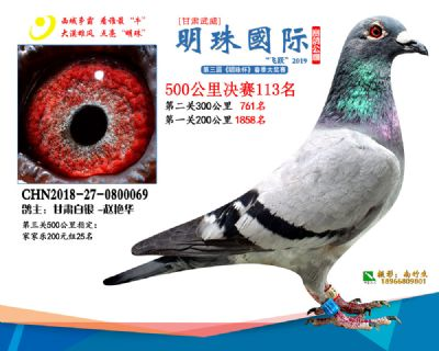 2019武威明珠113