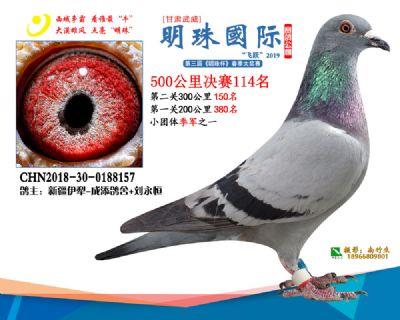 2019武威明珠114