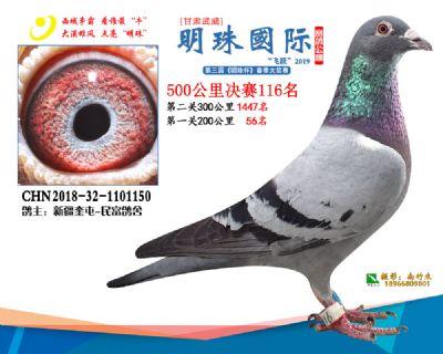 2019武威明珠116