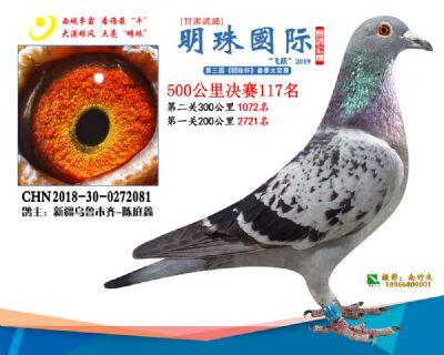 2019武威明珠117