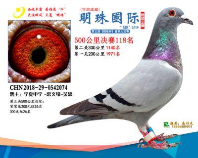2019武威明珠118