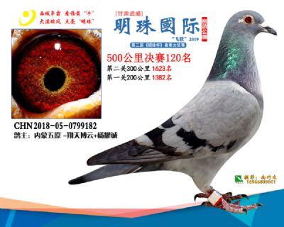 2019武威明珠120