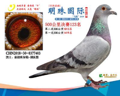 2019武威明珠123