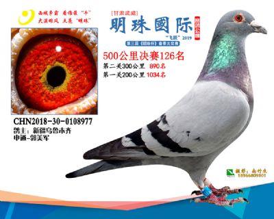 2019武威明珠126