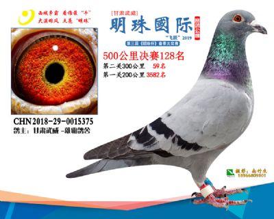 2019武威明珠128
