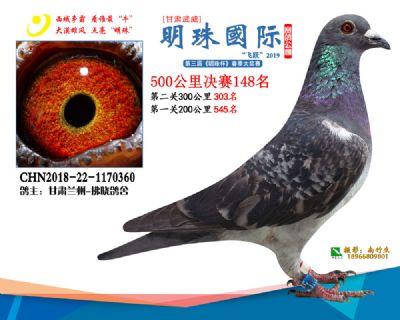 2019武威明珠148