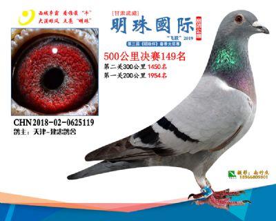 2019武威明珠149