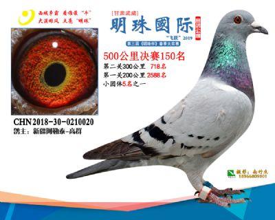 2019武威明珠150