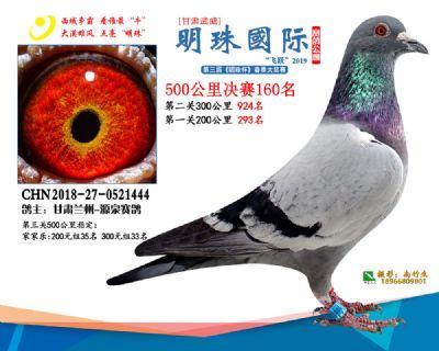 2019武威明珠160
