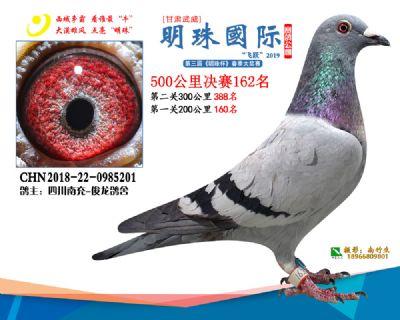 2019武威明珠162