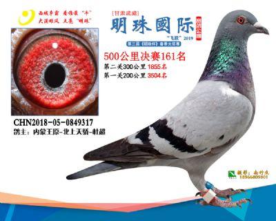 2019武威明珠161