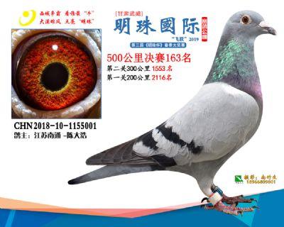2019武威明珠163