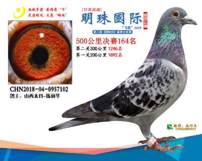 2019武威明珠164