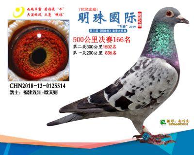 2019武威明珠166