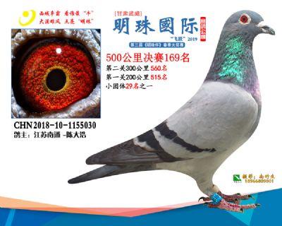 2019武威明珠169