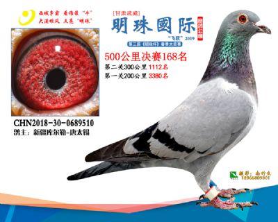 2019武威明珠168