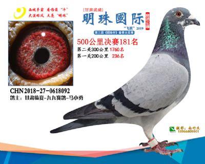 2019武威明珠181