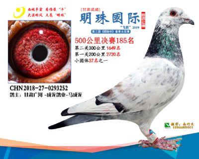 2019武威明珠185