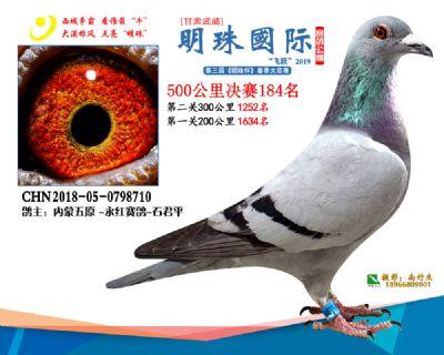 2019武威明珠184