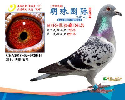 2019武威明珠186