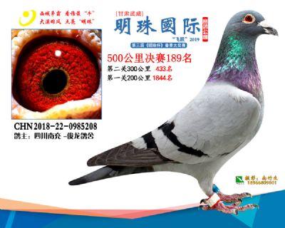 2019武威明珠189