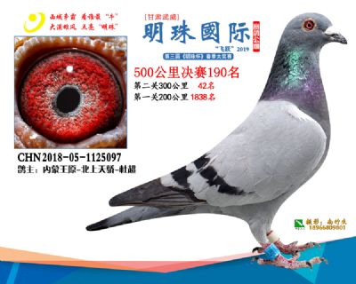 2019武威明珠190