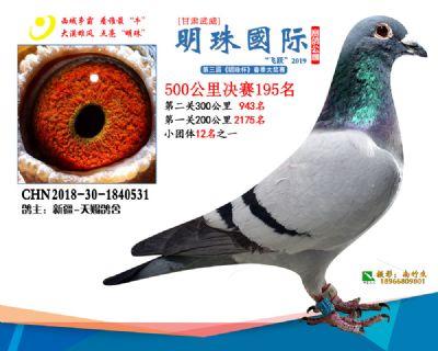 2019武威明珠195