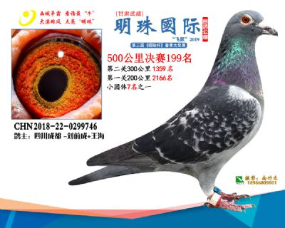 2019武威明珠199