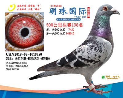 2019武威明珠198