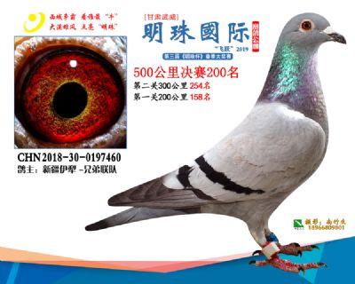 2019武威明珠200