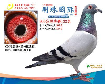 2019武威明珠132