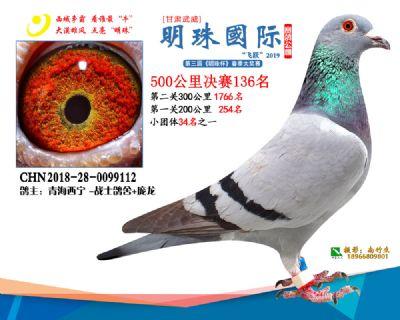 2019武威明珠136