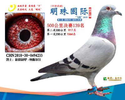 2019武威明珠139