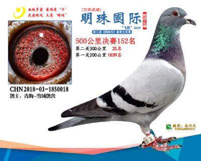 2019武威明珠152