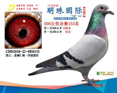 2019武威明珠153