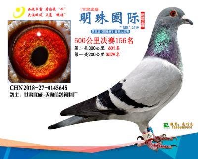 2019武威明珠156