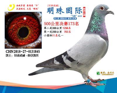 2019武威明珠173