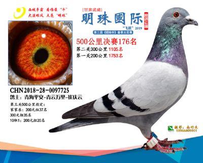 2019武威明珠176