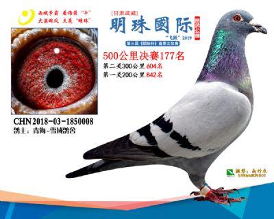 2019武威明珠177