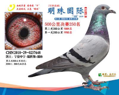2019武威明珠250